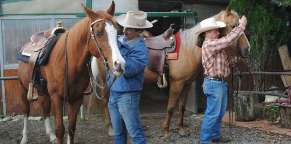Addestramento di cavalli